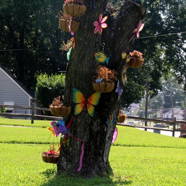 Raines Road Tree